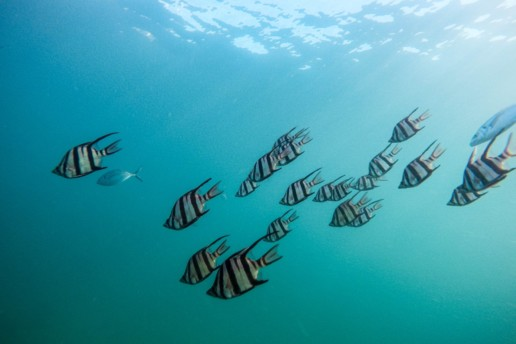 School of fish - group psychotherapy photos